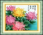 Hoa cúc đua nở 5d134