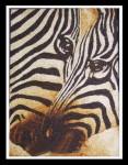 Tranh gạo Đôi ngựa vằn