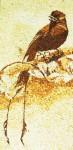 Tranh gạo Chim đuôi sao