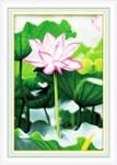 Hoa sen 5D147