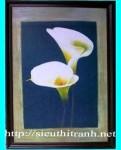 Tranh ép gỗ-hoa loa kèn-v37